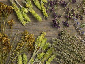 ما هي فوائد الأعشاب الطبيعية